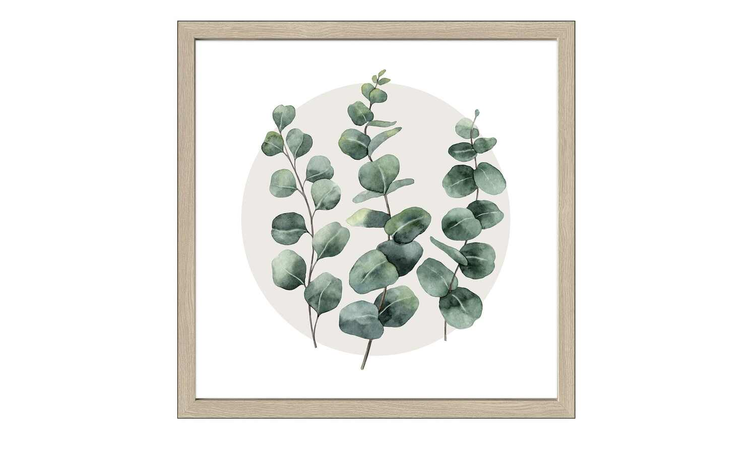 Different Eucalyptus Branches