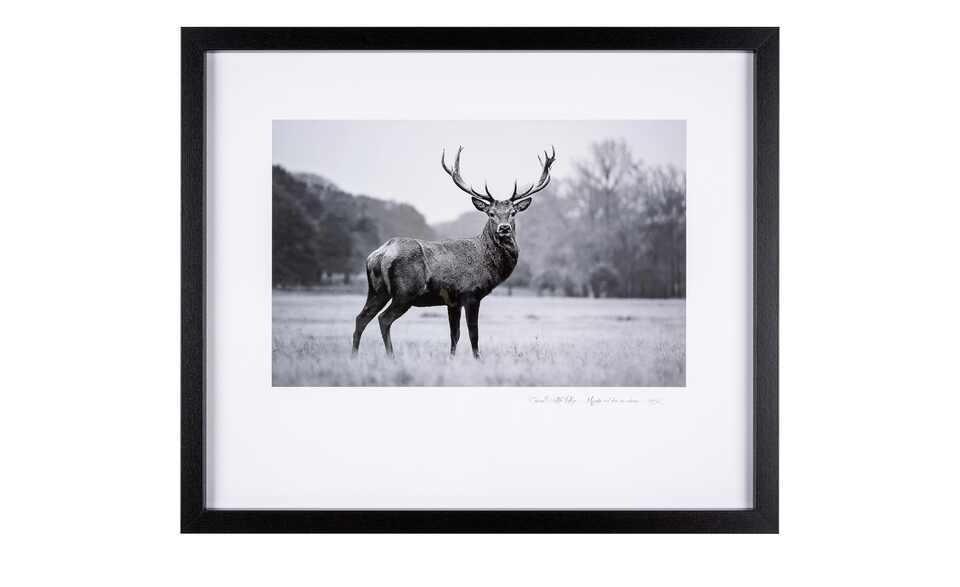 """Framed Art """"Majestetic Red deer"""""""