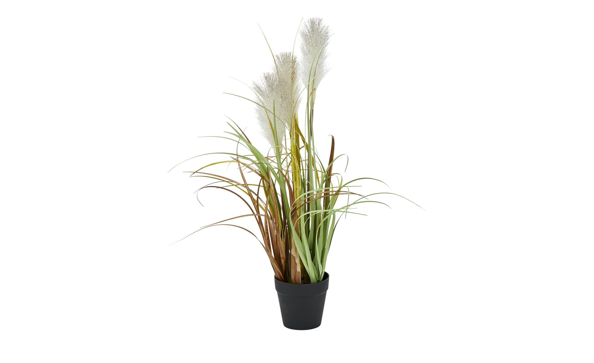 Pampasgras ¦ grün ¦ Kunststoff ¦ Maße (cm): H: 55 Dekoration > Kunstblumen - Höffner   Dekoration > Dekopflanzen > Kunstpflanzen   Möbel Höffner DE